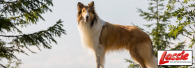 *** Lassie ***